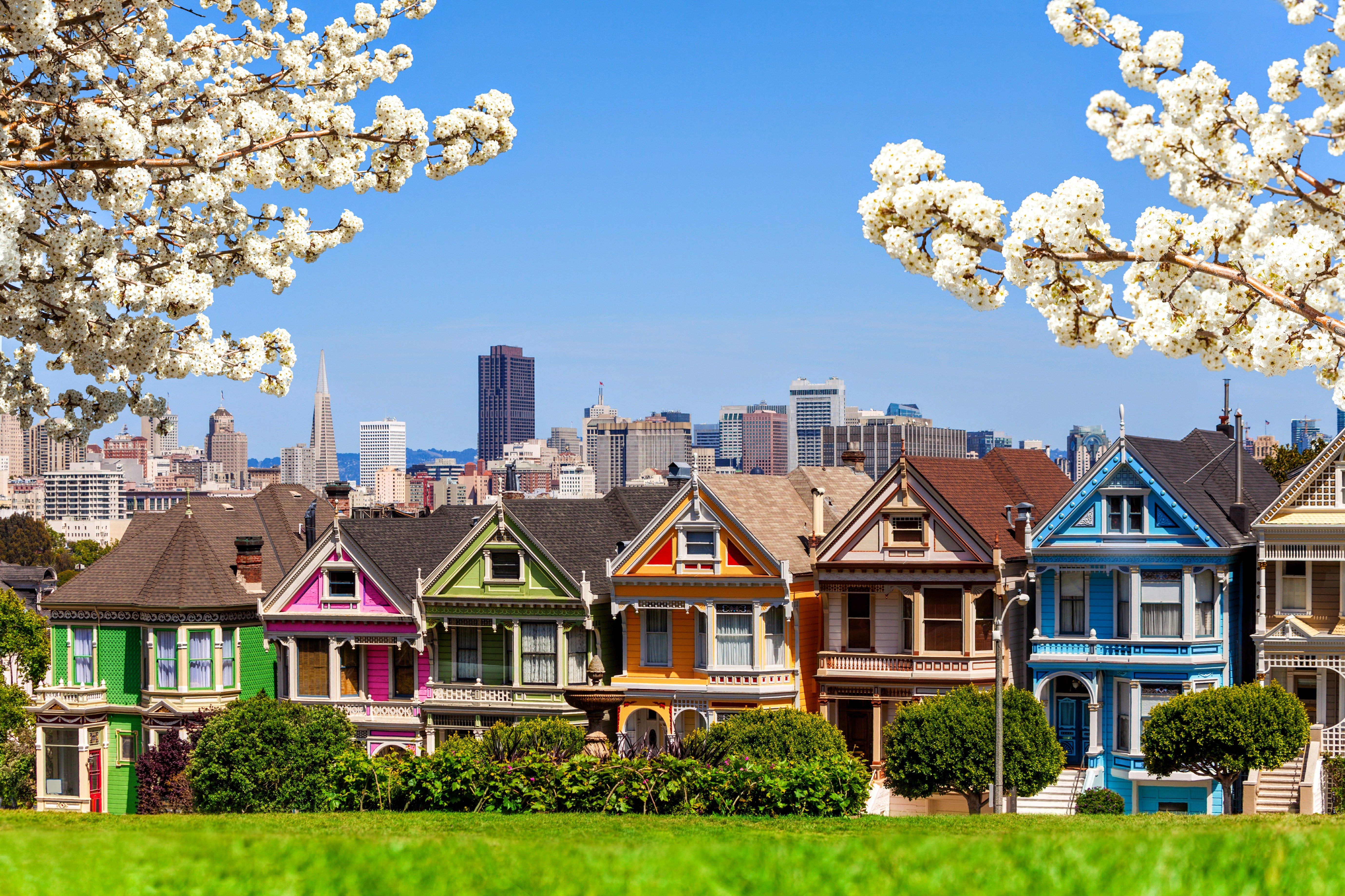 Enjoy a picnic in beautiful Alamo Park with a view of the popular 'Painted Ladies.'