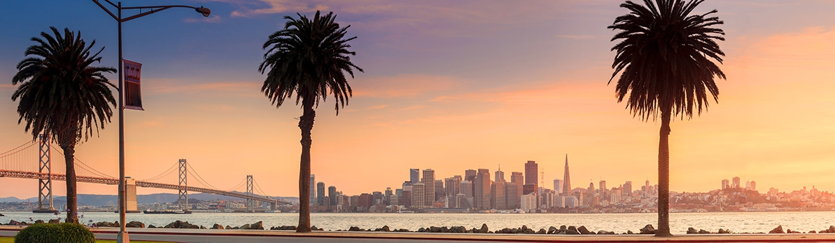 Row of Palm Trees and view of San Francisco skyline