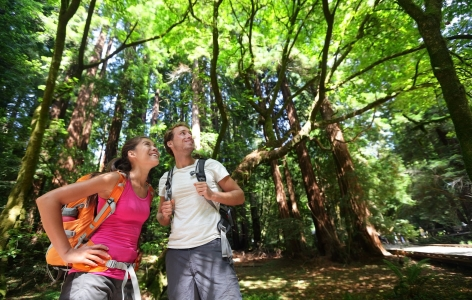 Couple hiking amongst large trees