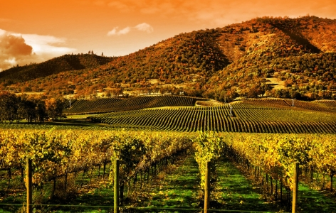 Landscape of Napa Valley, a San Francisco Attraction